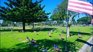 Veterans Day flags at Ivy Lawn Cemetery